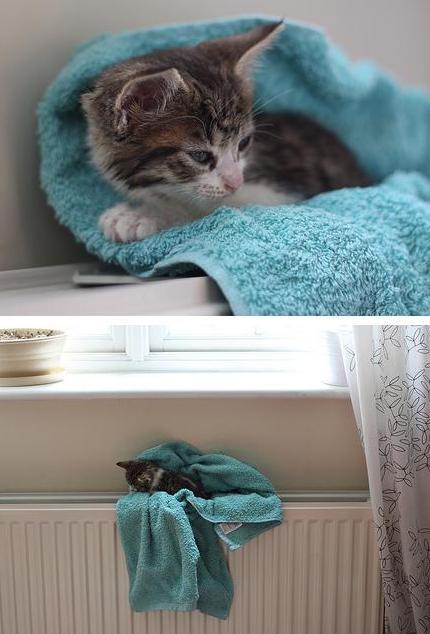 Consejos para ba ar a un gato con p nico al agua - Banar gatos ...