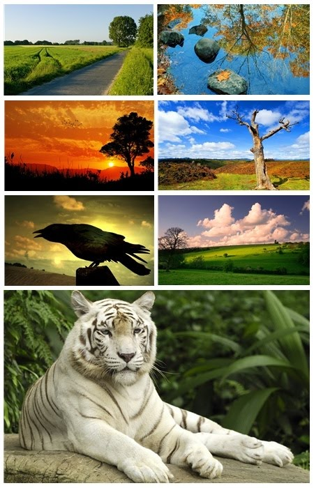 animated wallpapers of nature. Nature Wallpapers Pack