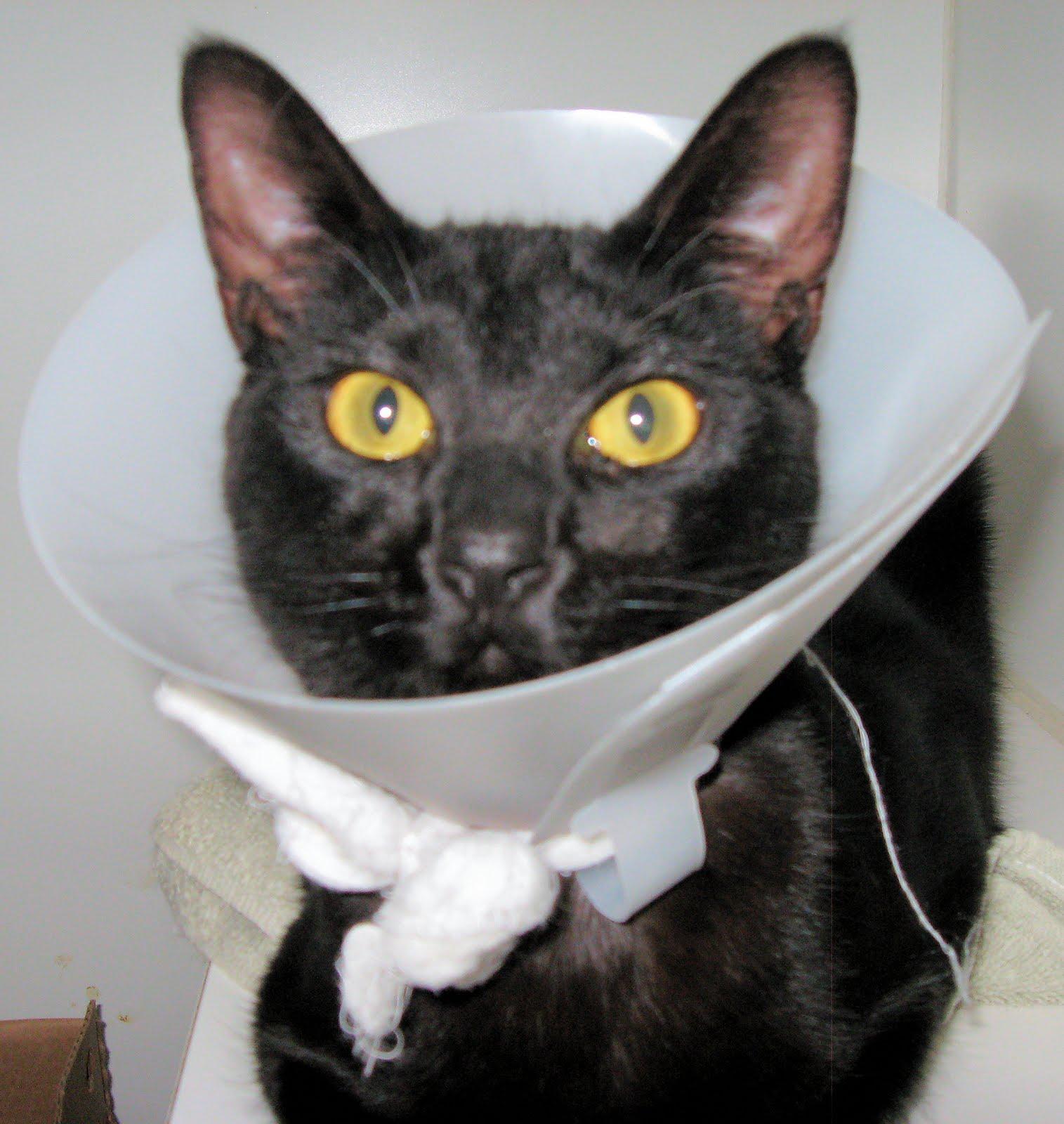 Cats For Adoption Nanaimo