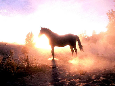 horse wallpaper wild. Horses Wallpapers
