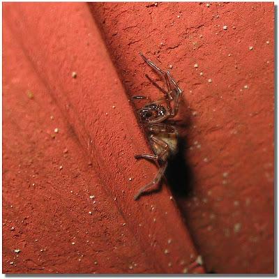 En spindel.