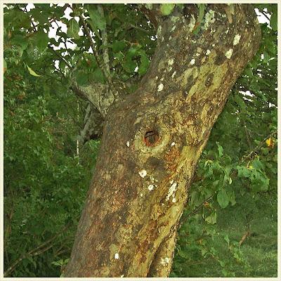 Ett träd.
