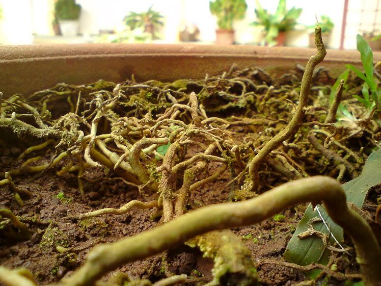 akar pokok bunga