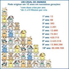 Entenda a Procriação Descontrolada de Animais de Rua