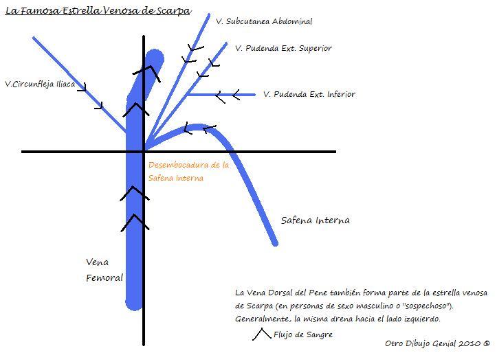 Anatomía Normal: Sistema Venoso Superficial de Miembro Inferior