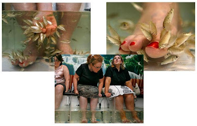 fish pedicure, dr. fish, doctor fish, dr fish, yvonne hair nail salon, pedicure, garru-rufa, garru rufa, carp