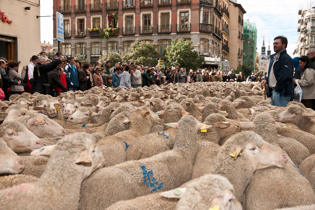 Fiesta de la Trashumancia - Madrid 31 de octubre 2010