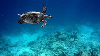 sony nex underwater waterproof dicapac case snorkel