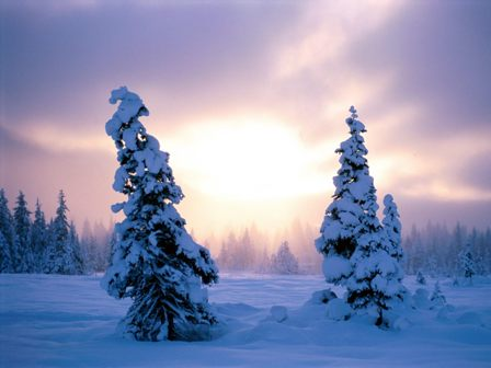 are completely free, download and enjoy these winter season wallpapers.