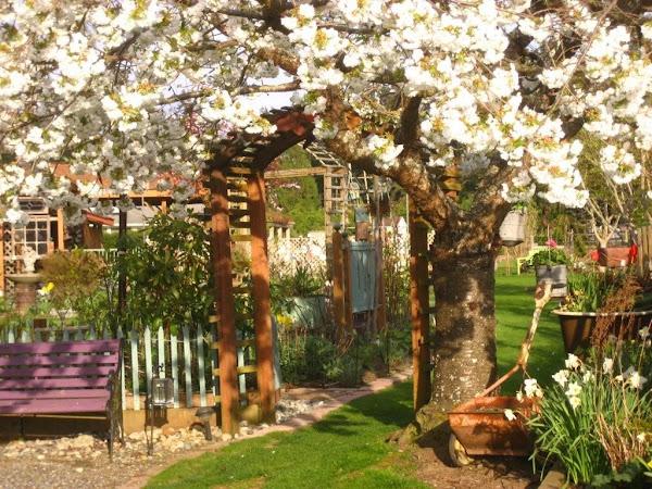 Misty Spring Garden