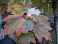 Aurumn leaves