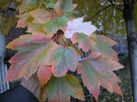 Aurumn leaves