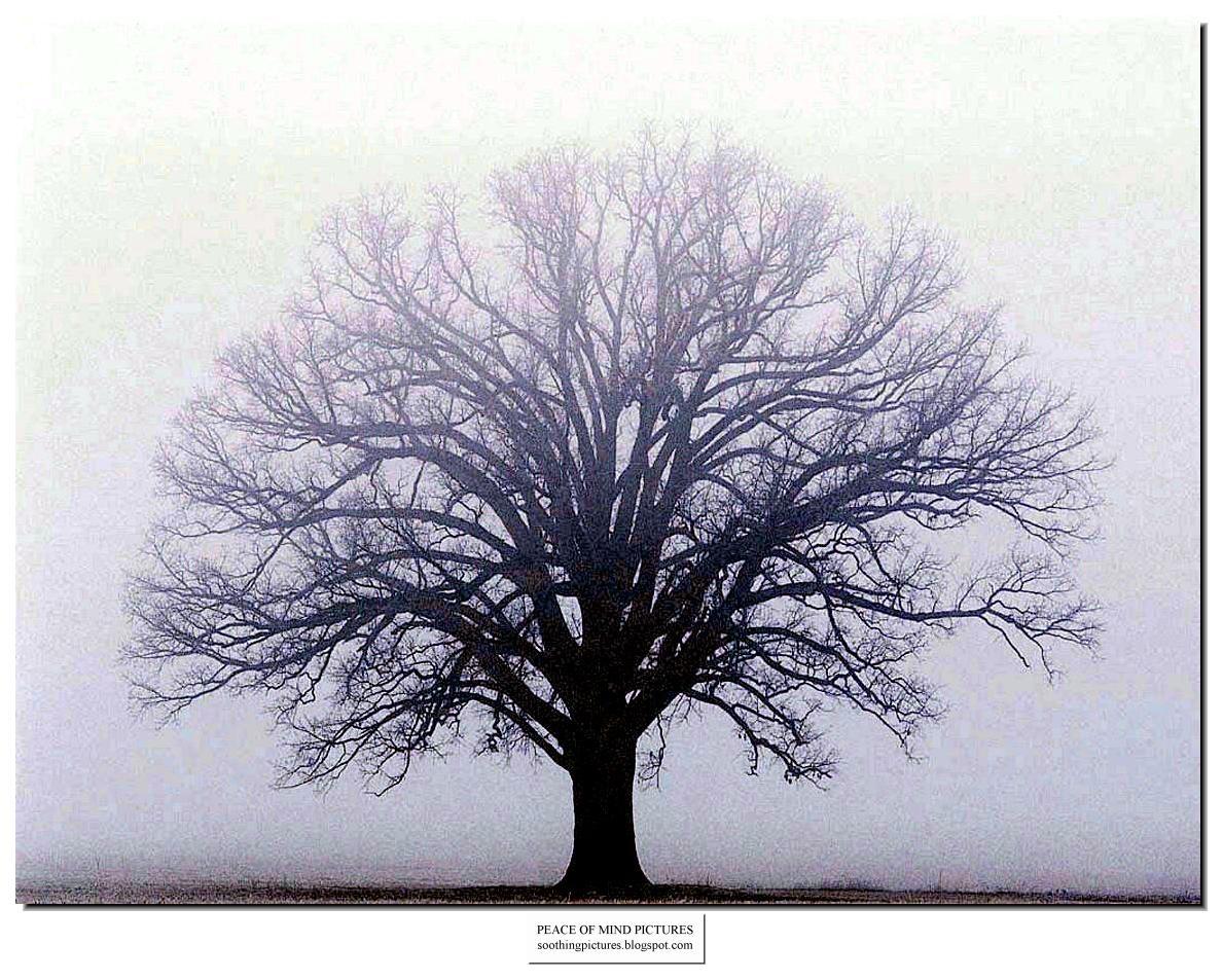 http://2.bp.blogspot.com/_8KMrX6Wq1ko/TLcU3FomMmI/AAAAAAAAH6M/Gb3fSFMV2PI/s1600/peace-of-mind-pictures-fog-011.jpg