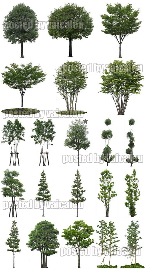 Photoshop 50 trees with white background