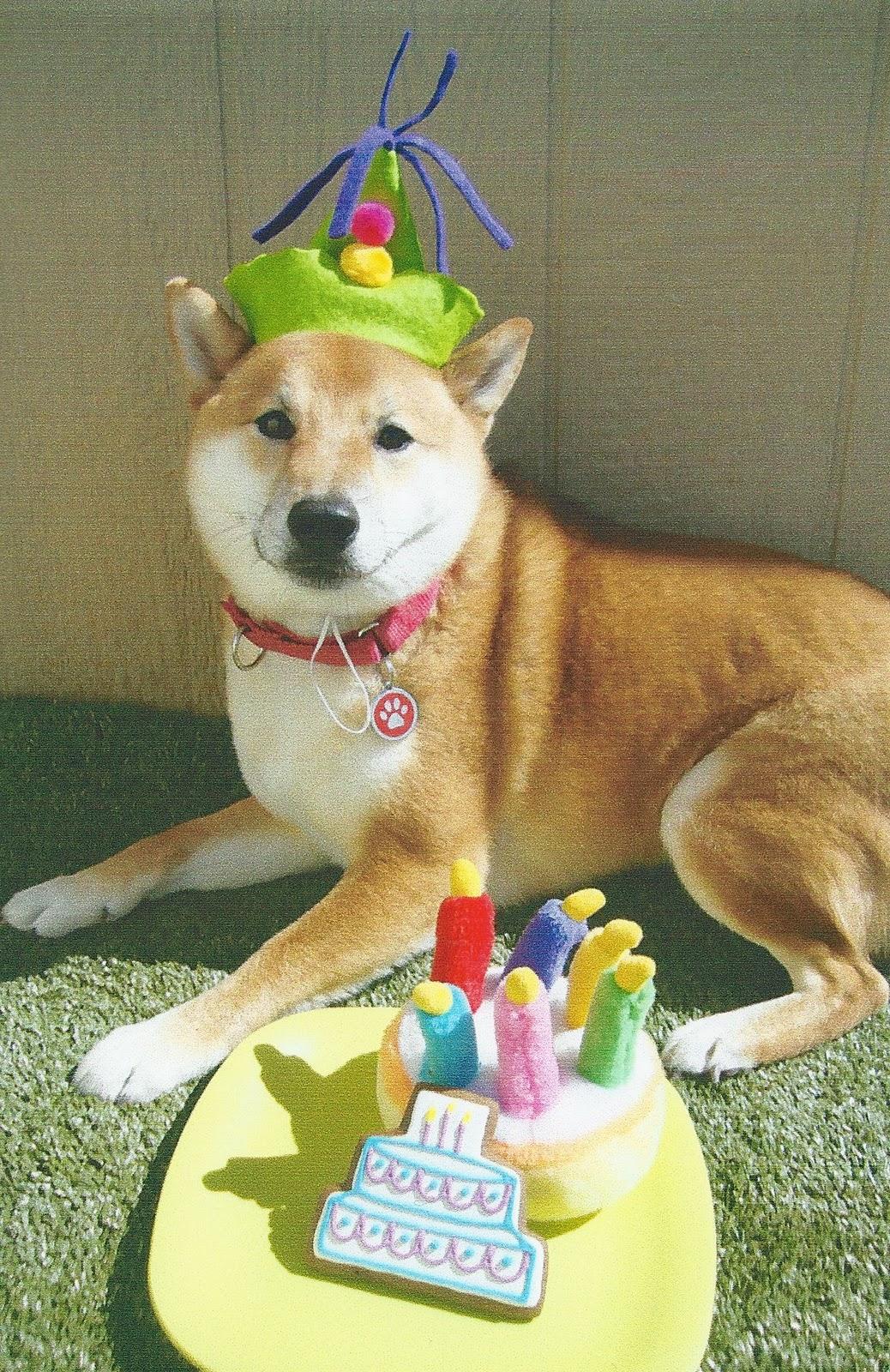 Shibe Doge Birthday