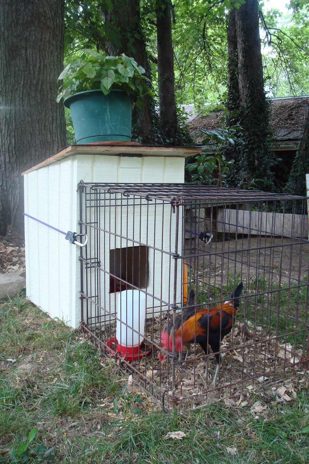 Hectichousehold chickens and coops and runs for Small chicken coop with run