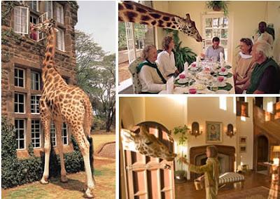 http://2.bp.blogspot.com/_8M4A38LyBBs/Sid5FXgratI/AAAAAAAAKOE/2x2T__WErOo/s400/Giraffe+Manor8.jpg