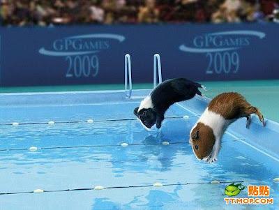http://2.bp.blogspot.com/_8M4A38LyBBs/Sq6BmpOjnAI/AAAAAAAAOsk/dr8qPxGJJjc/s400/Olympic+mouse9.jpg