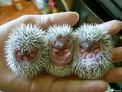 World Most Amazing And Cool Animal Babies Somethin Bizarre