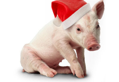 Crazy funny pictures animal christmas celebration for Christmas pictures of baby animals