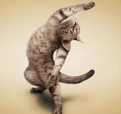 Cool cat yoga loving cat