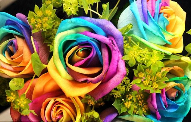 Something amazing awesome rainbow rose for How much are rainbow roses