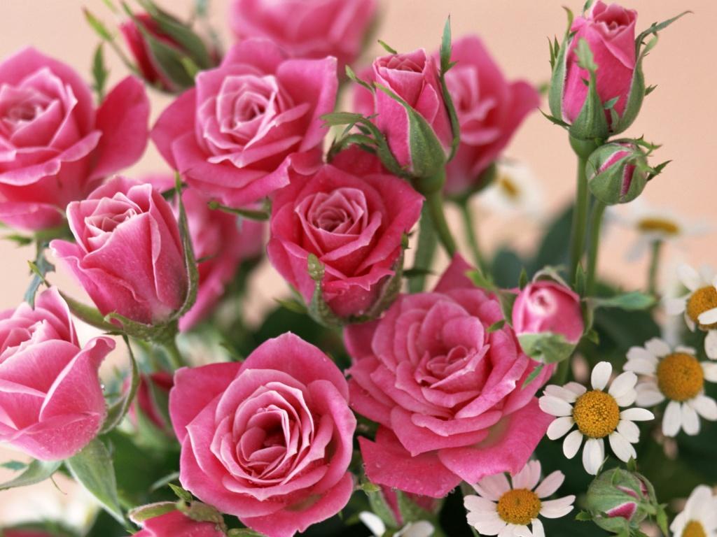 rosas no jardim poema : rosas no jardim poema:Flores De Rosas