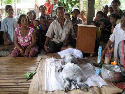 Populares fazem ritual para o alien-vaca