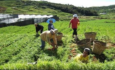 Philippine Vegetable Farm