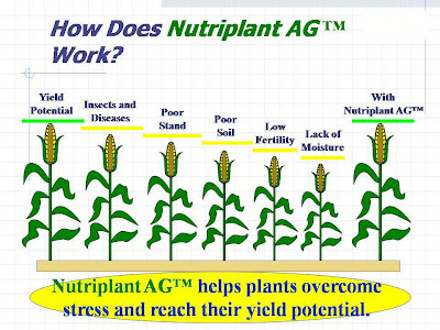 Nutriplant AG Yield Potential