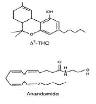 estructura quimica, anandamida
