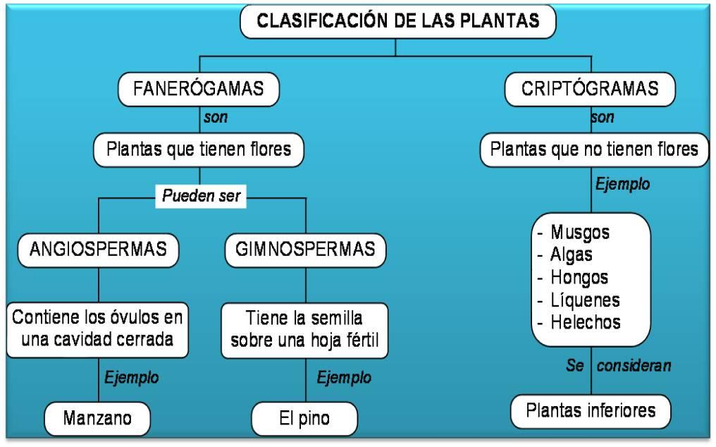 fotosintesis es catabolico o anabolico