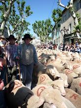 Jeunes bergers