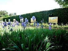 les iris devant les reproductions