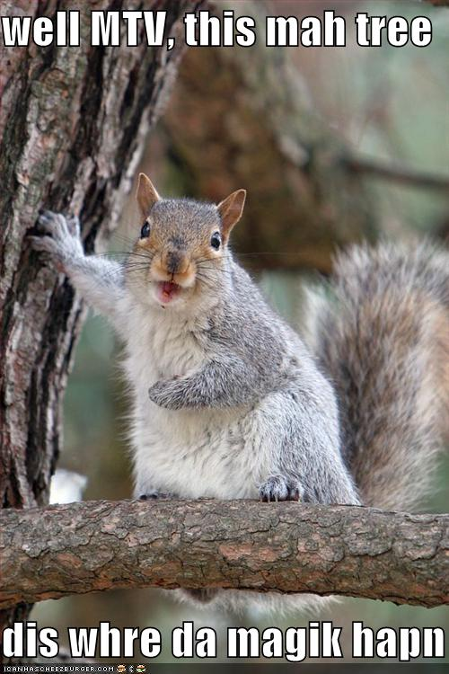 Funny squirrel pictures - photo#18