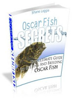 Discover How To Care For Your New Oscar Fish So You Can Keep It Healthy  For A Very Long Time!