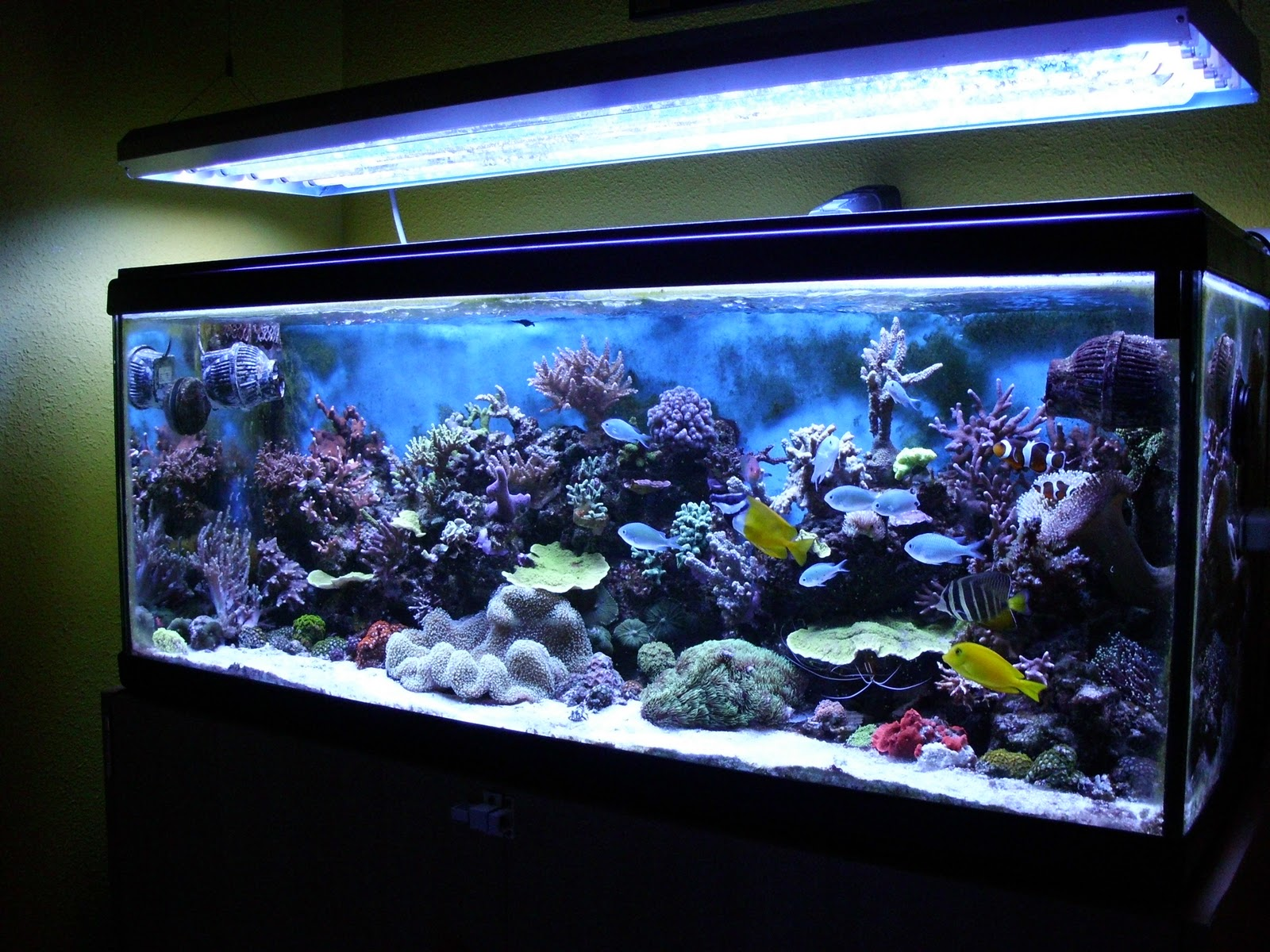 Los acuarios de irrayoli los acuarios de irrayoli - Pecera de pared ...