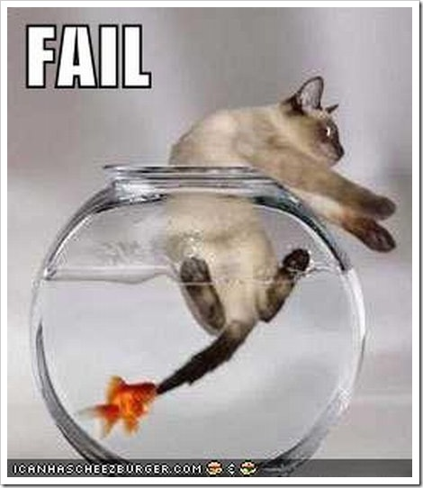 Funny comedy pics july 2010 for Fish videos for cats