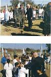 Plantación de Arboles de Olivo por la Paz