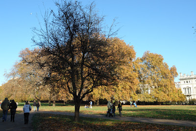 A beautiful tree in Green Park in London