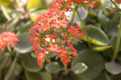 Small bright red flowers