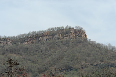 Hilly structure in Sariska