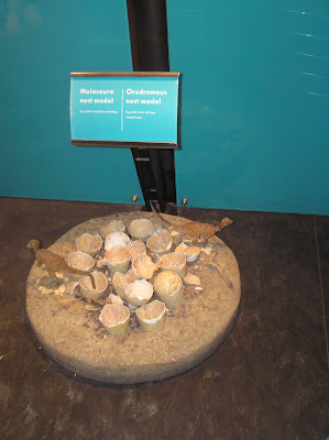 Fossil of dinosaur nests at the Natural History Museum