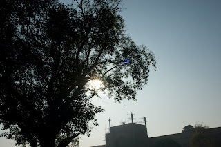 Sun shining through a tree in the Taj Complex