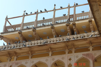 Pigeons sitting on the various bars of the Jaipur City Palace
