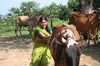 Ratan Rajput aka Laali of Zee TV's 'Agle Janam Mohe Bitiya Hi Kijo' fighting with bulls as part of a shot