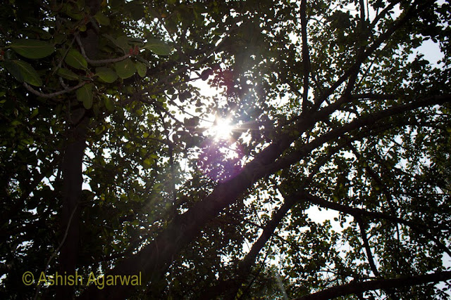 Sunlight coming in through the tree cover at Jallianwala Bagh in Amritsar