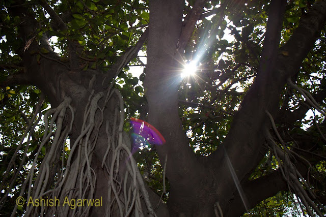 Sunlight coming in through the canopy of a tree in the Jallianwala Bagh in Amritsar