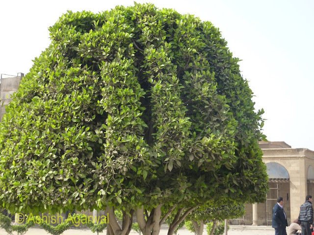Saladin Citadel in Cairo - Landscaping done to get the name of Allah on the plant
