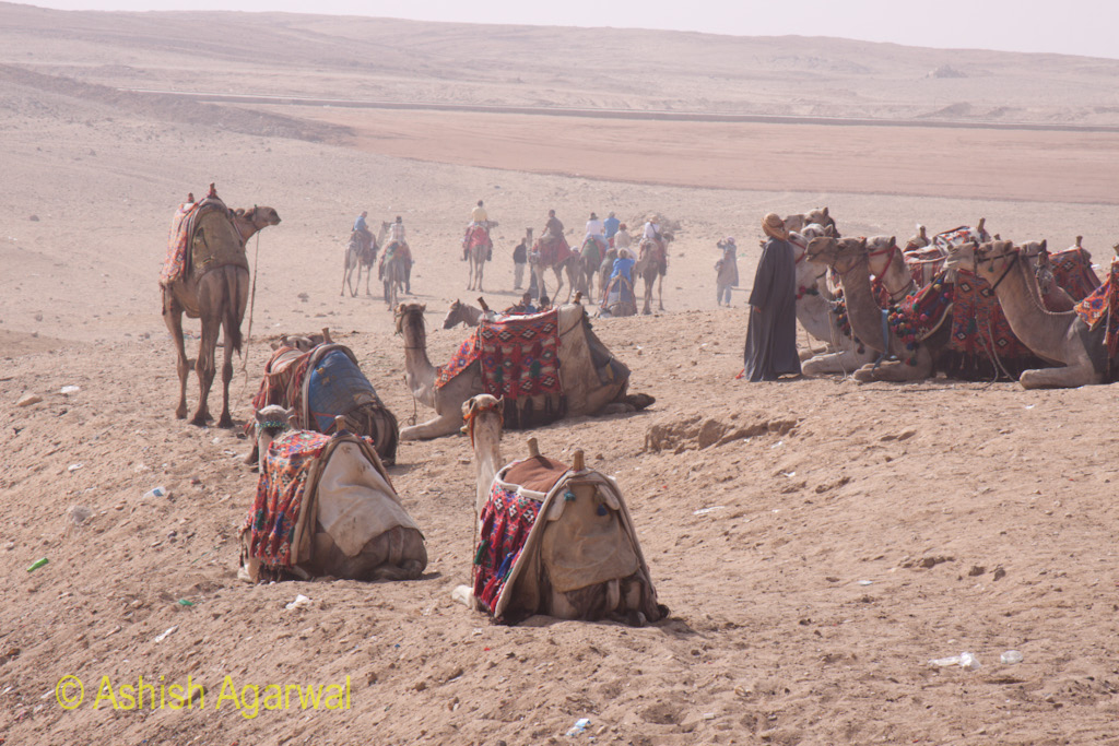 Camels, fully decorated, waiting for tourists to take the ride on the sands for a small consideration